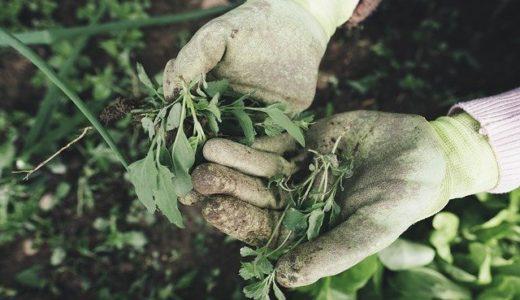 50代も知りたい 庭の雑草対策