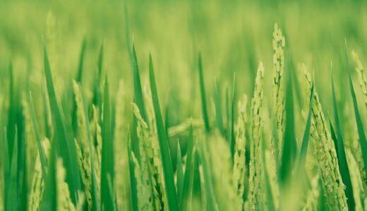 【腸活の意外なメリット】発芽玄米がおいしい! 50代セミリタイア主婦の発見